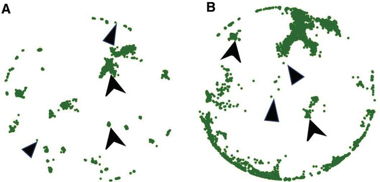 Model generated morphology of a unidirectional micro-TENN. (A) X–Y projection at Z=910μm; (B) X–Y projection at Z=1380μm. Inner diameter 180 μm, length 2mm and approximately 20,000 neurons.
